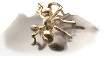 Nibbling ant cufflinks close up